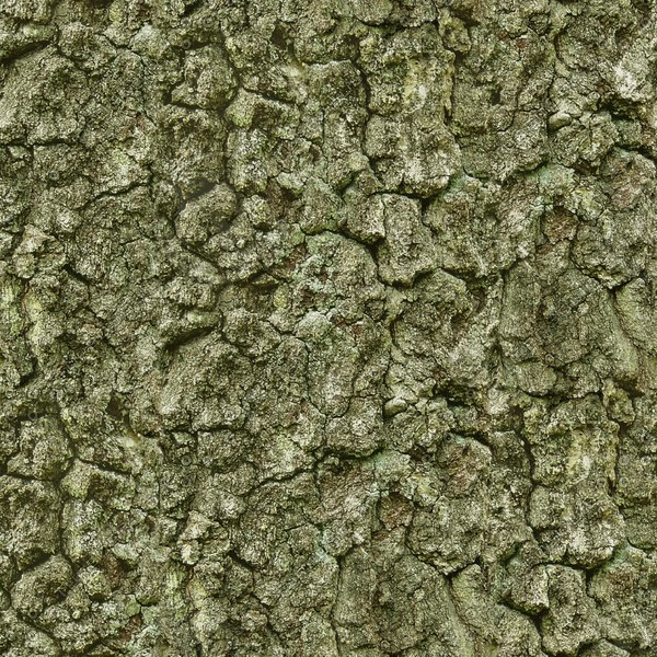 BRKT035 tree bark spruce