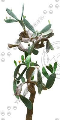 Desert_plants_10.tga