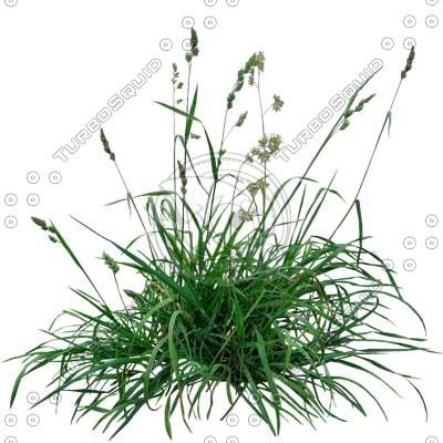 Grass_05_01.jpg