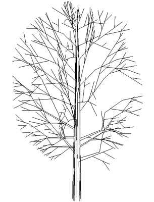 Tree Oval Upright Deciduous