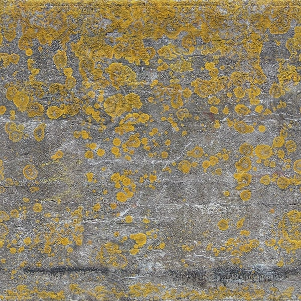 W422 concrete harbor wall texture