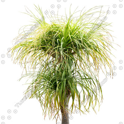 Tree_tropic_13.tga