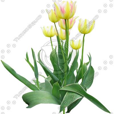 FlowerL_18.tga