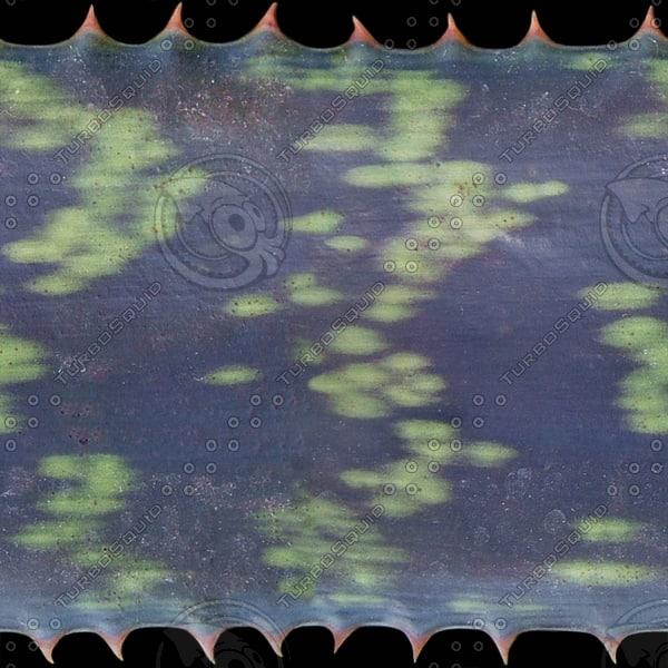 CACT001 cactus plant texture