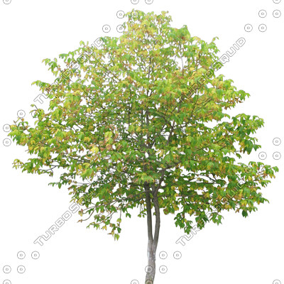 Tree_09.tga
