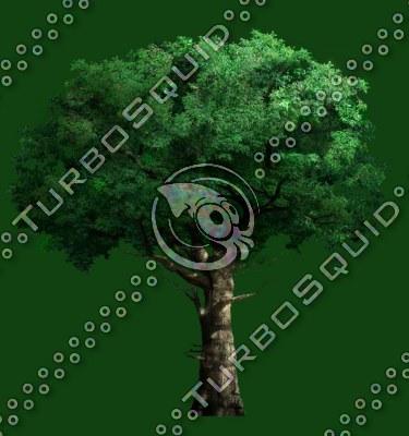 tree_06.tga