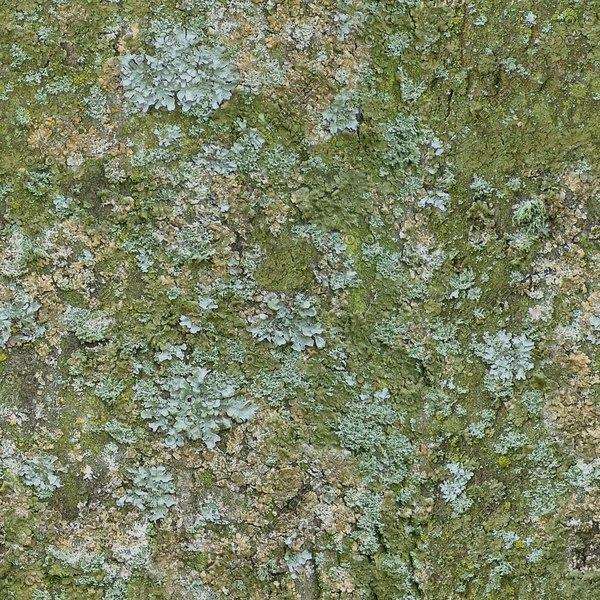 TBRK043 mossy tree bark texture textura