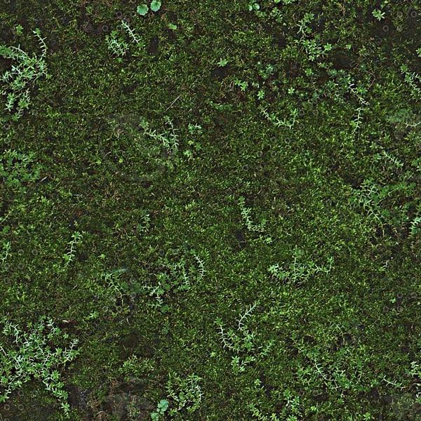 G119 mossy grass texture