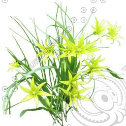FlowerL_21.tga