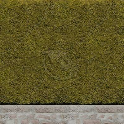 H003 hedge hedging wall texture