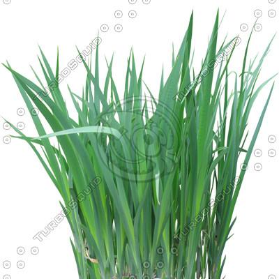 GrassL_03.tga