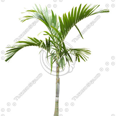 Palm_42.tga