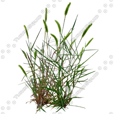 Grass_19_01.jpg