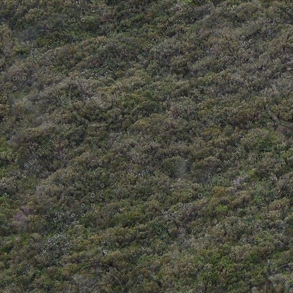 G091 hillside heather ground cover texture 1024