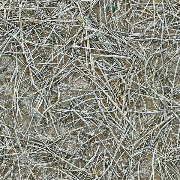 G293 frosty frozen grass texture