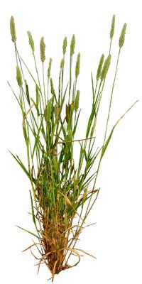 Grass_20_01.jpg