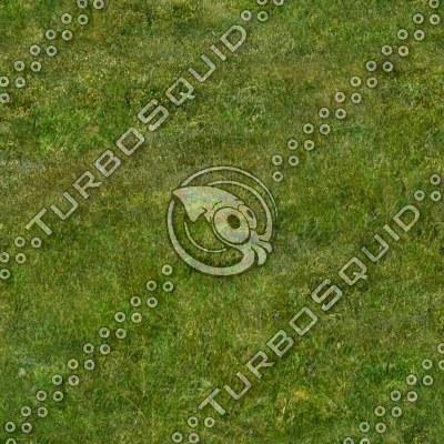 wildgrass.tga