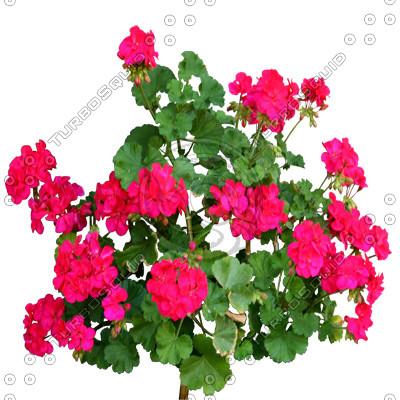 Flowers_N_12.tga