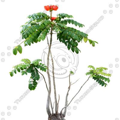 Tree_tropic_12.tga