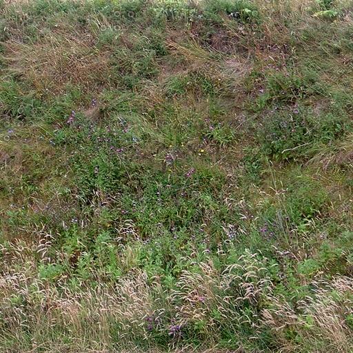 G229 grassy hill grass