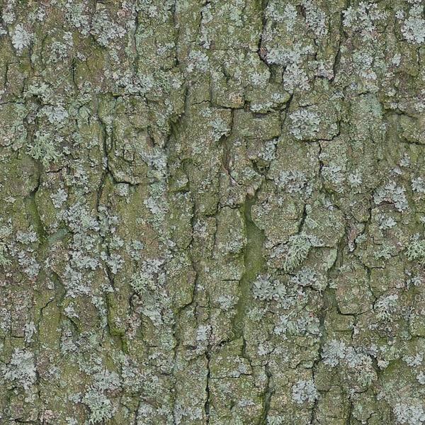 TBRK046 mossy bark tree texture