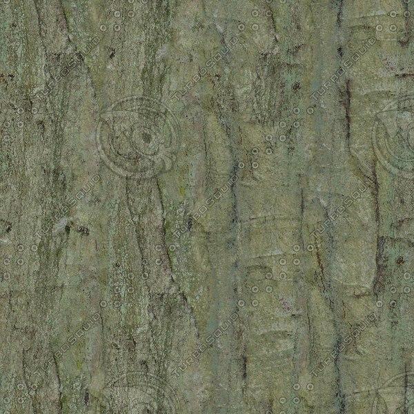TBRK048 mature tree bark texture