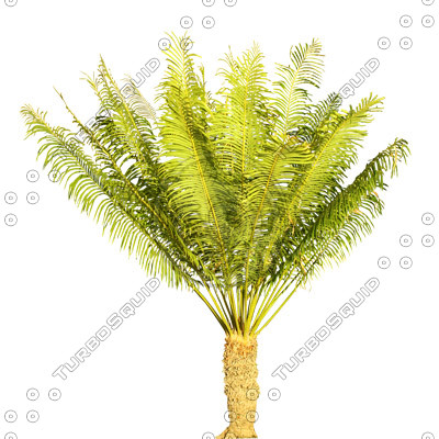 Palm_18.tga