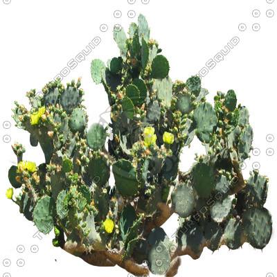 Desert_plants_06.tga