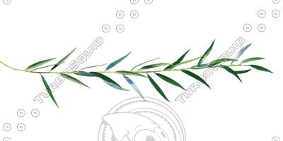 Branch_s_16.tga