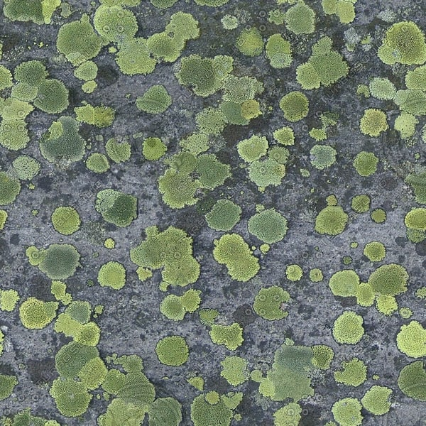 RS049 mossy stone rock texture