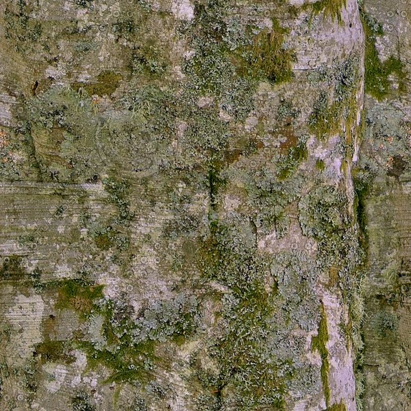 TBRK040 mossy tree bark