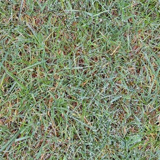 G270 dew covered grass texture