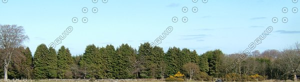 BG023 treeline background trees