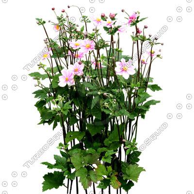 Flowers_N_10_01.jpg