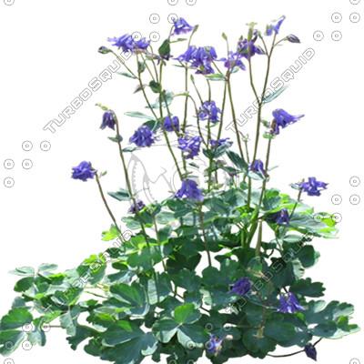 FlowerL_46.tga