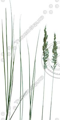 Grass_23.tga
