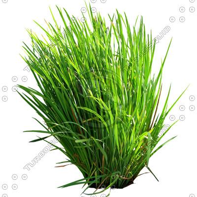 Grass_10.tga