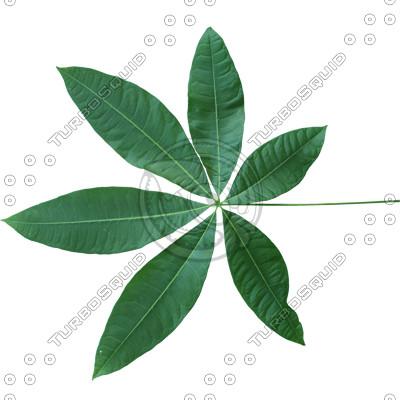 Leaf_20.tga