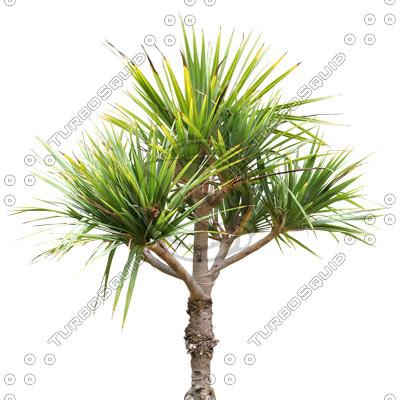 Palm_12.tga