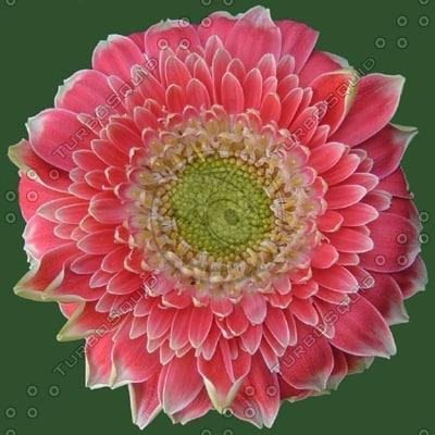 FLR07 red flower texture