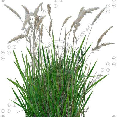 Grass_21.tga