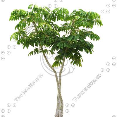 Tree_27.tga