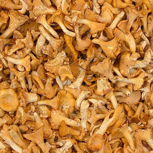 FD001oyster mushrooms picture