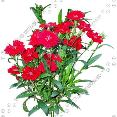 Flower_H_22.tga