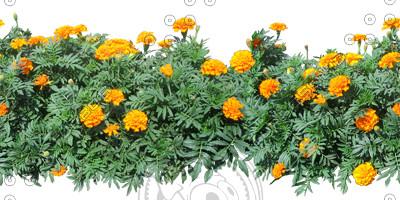 Flower_34_01.jpg