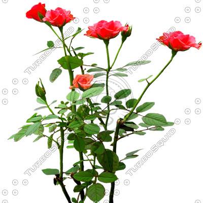 Flower_L_01.tga