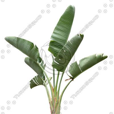 Palm_06.tga