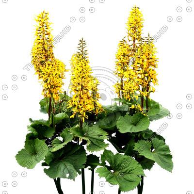Flowers_N_07.tga