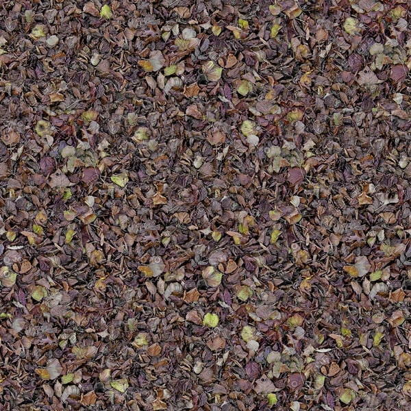 G161 dead fallen leaves texture