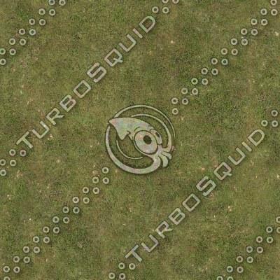 grass_01.tga